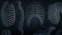 Code School: The Anatomy of Backbone.js Part 2