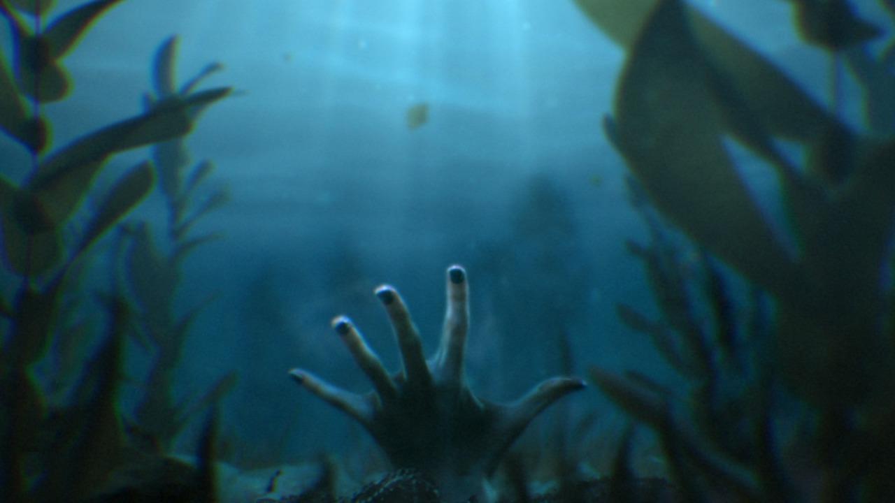 kelp-forest-shark