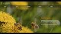 Creating Fullscreen HTML5 Video Backgrounds
