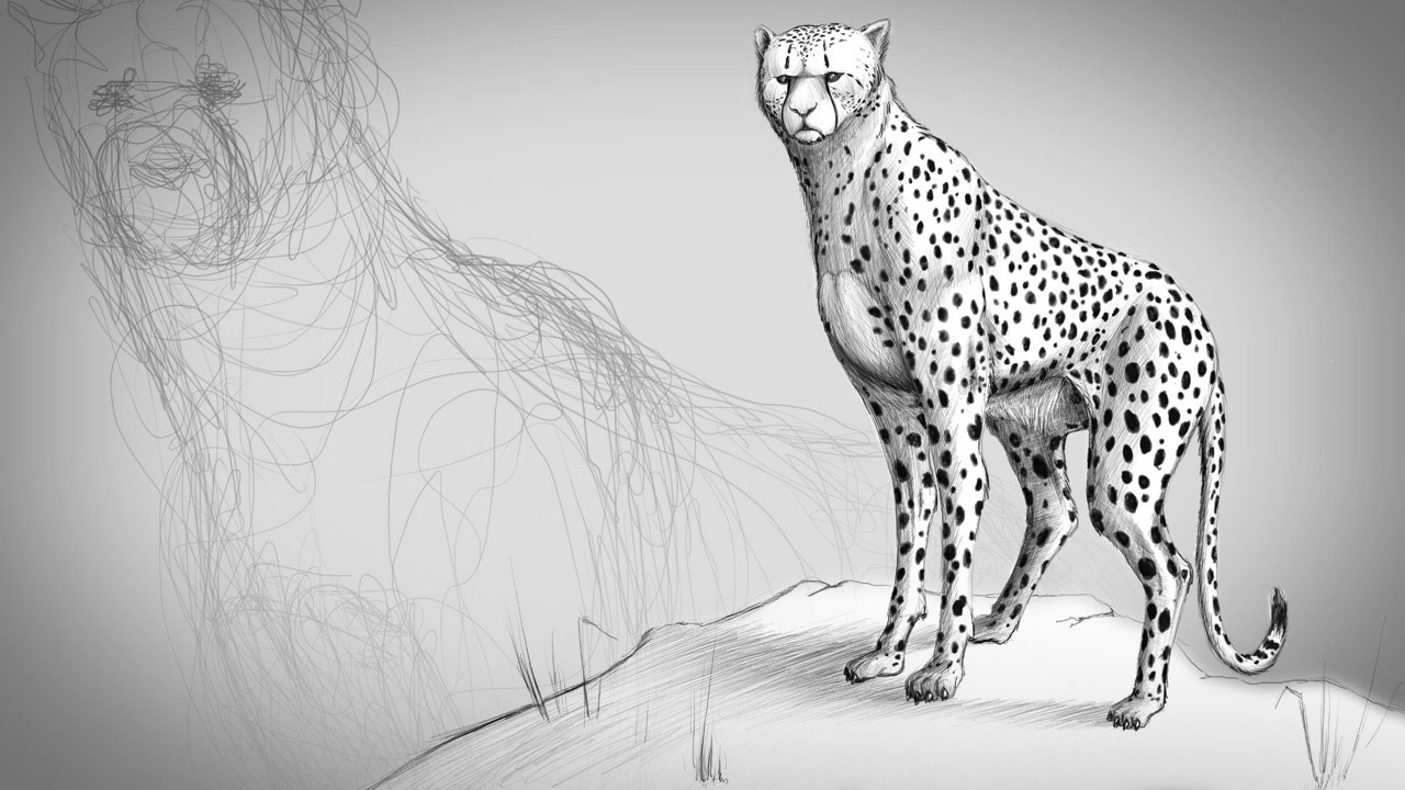Fundamentals Of Drawing Animal Anatomy Pluralsight