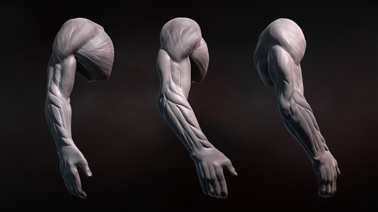 Sculpting Human Arms In Zbrush Pluralsight